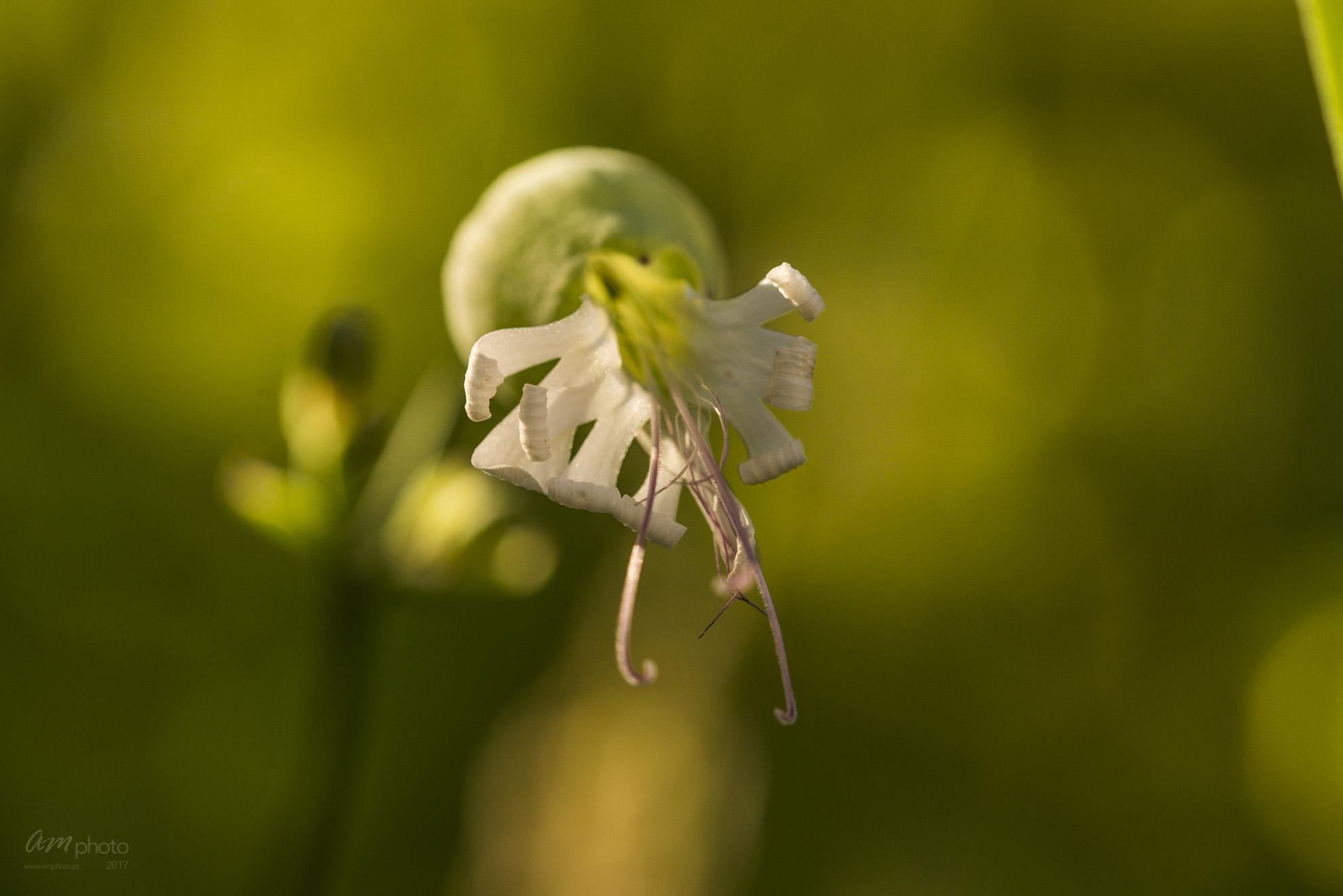 Wild Flowers-559