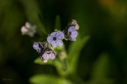Wild Flowers-723