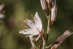 Wild Flowers-594