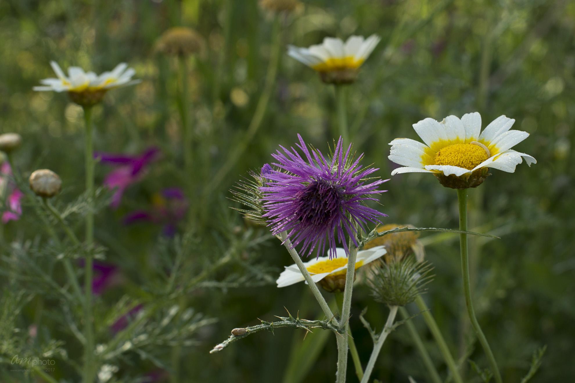 Wild Flowers-240