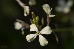 Wild Flowers-741