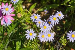 Wild Flowers-303
