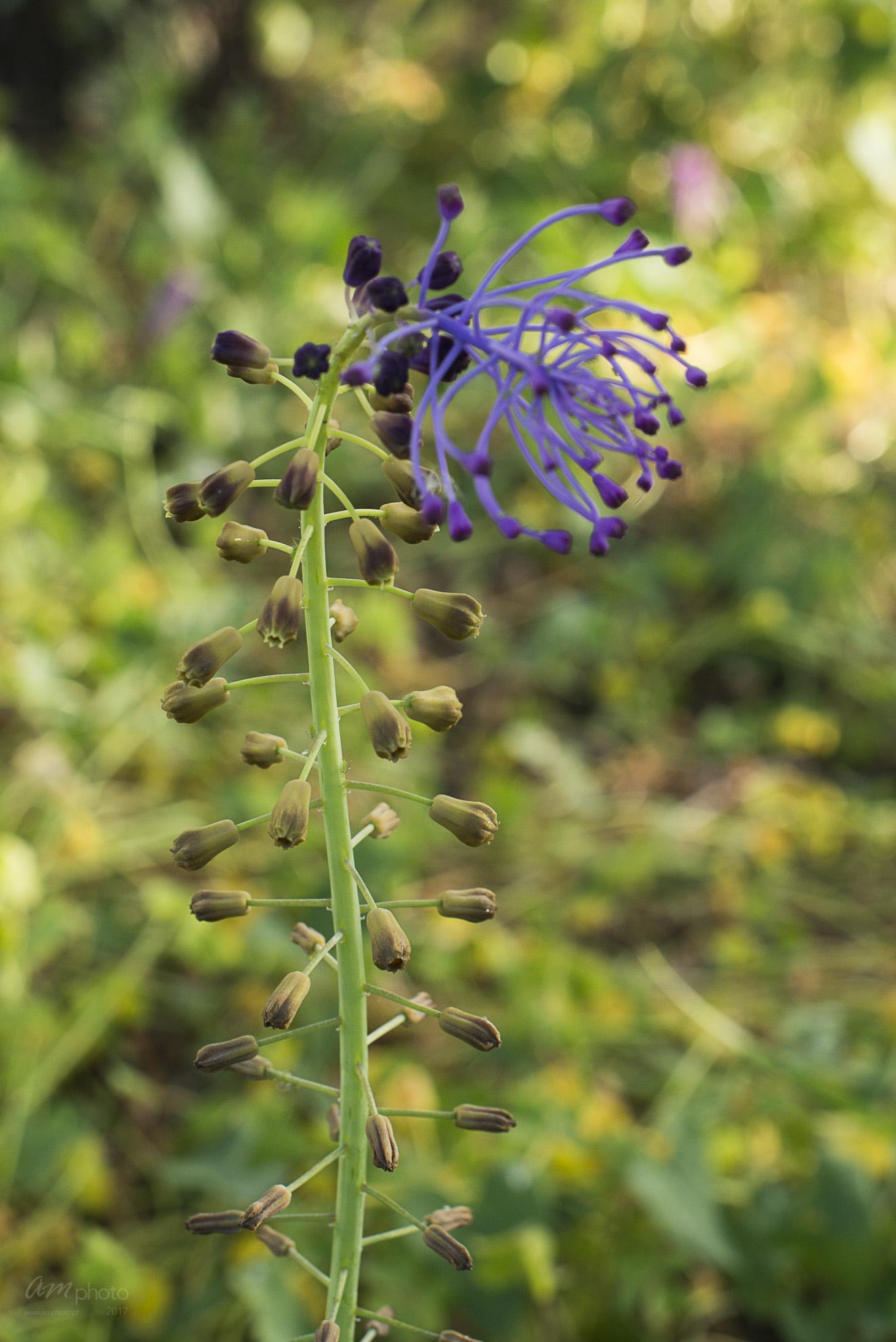 Wild Flowers-246