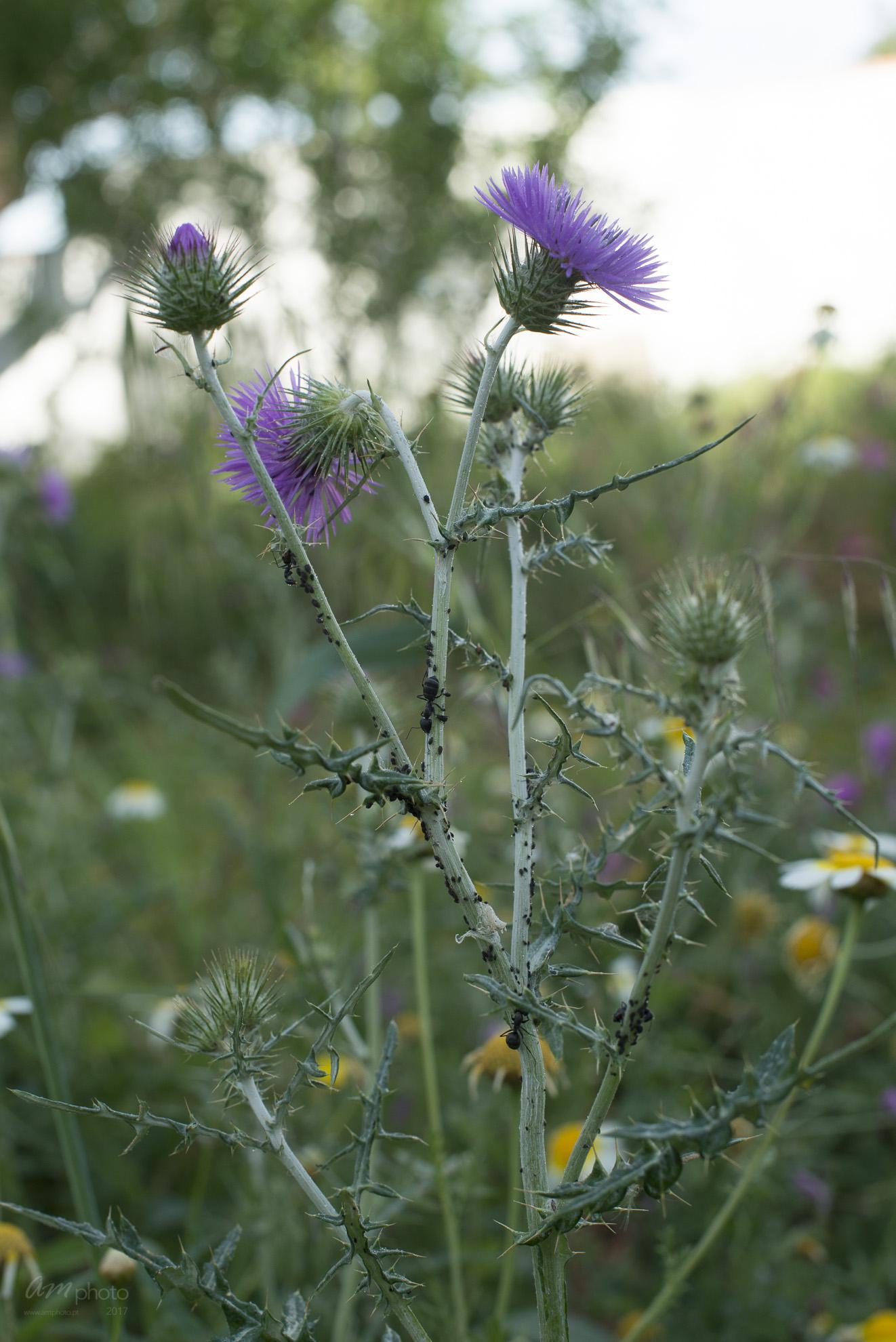 Wild Flowers-175