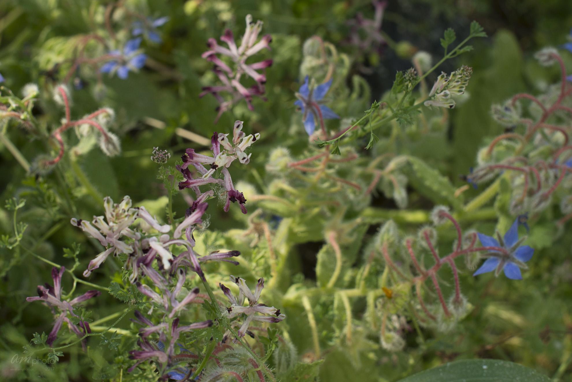 Wild Flowers-250