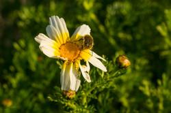 Wild Flowers-641