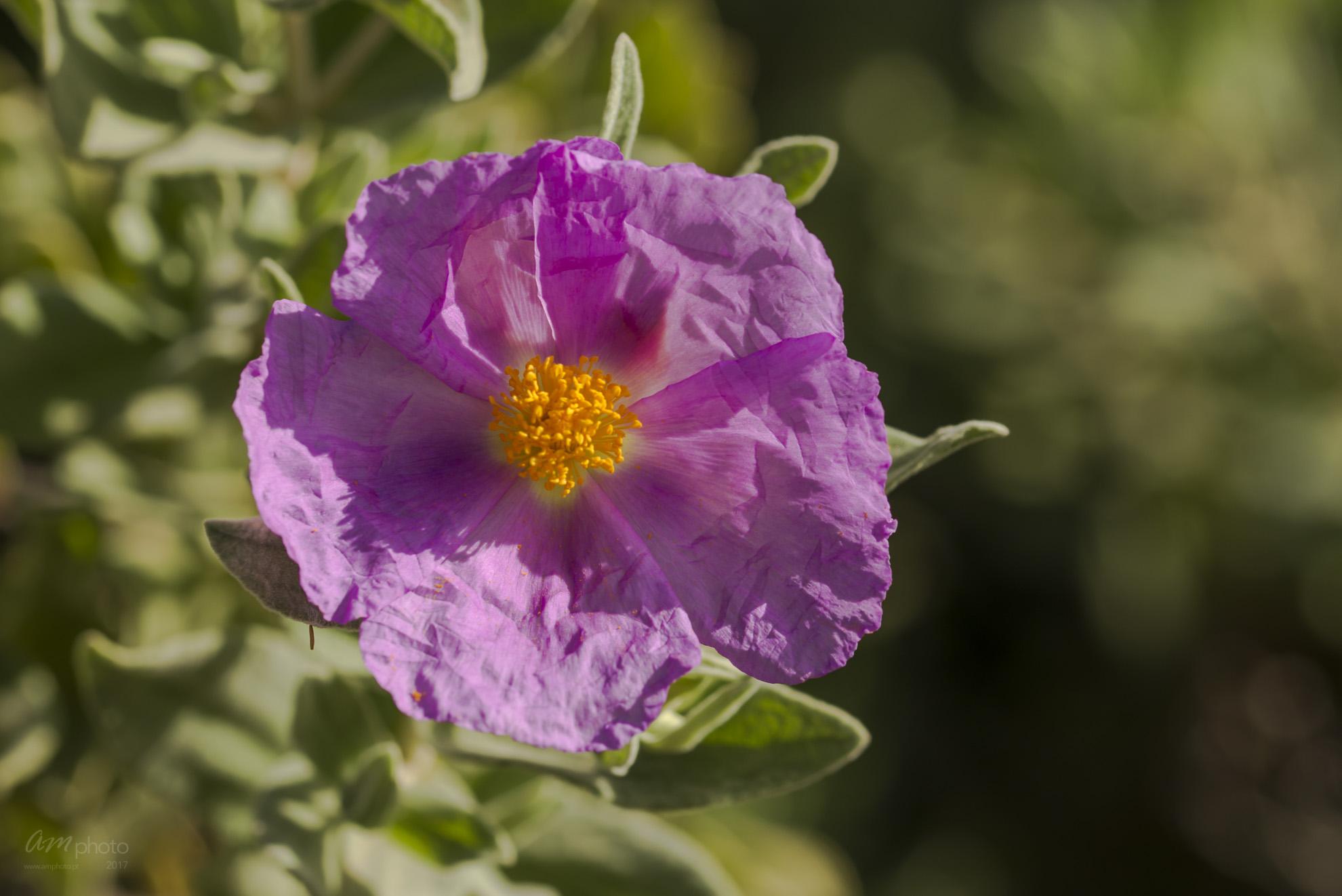 Wild Flowers-670