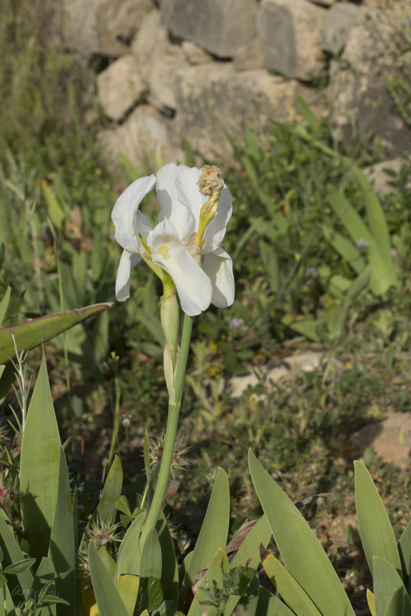 Wild Flowers-162