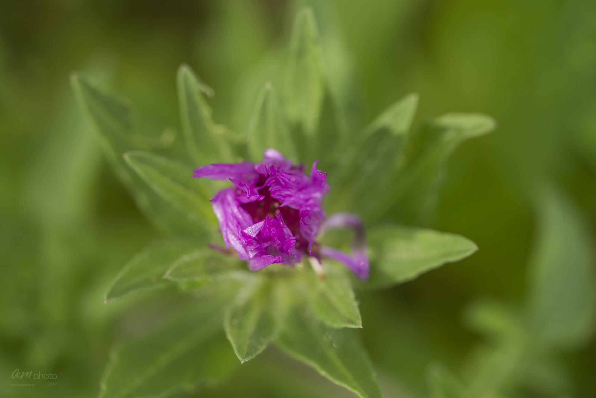 Wild Flowers-454