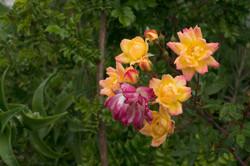 Wild Flowers-50