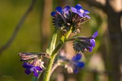Wild Flowers-620