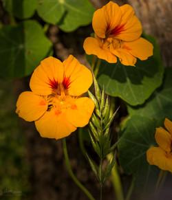 Wild Flowers-549