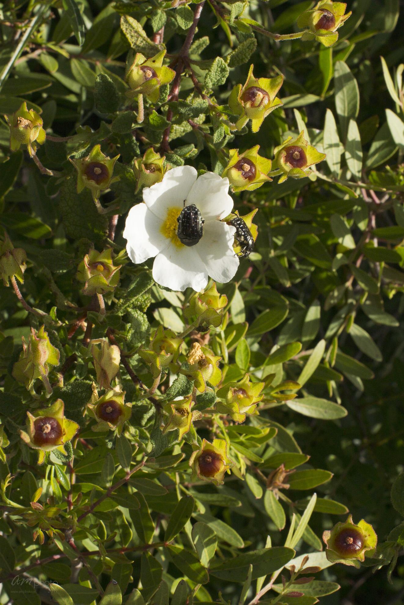 Wild Flowers-133