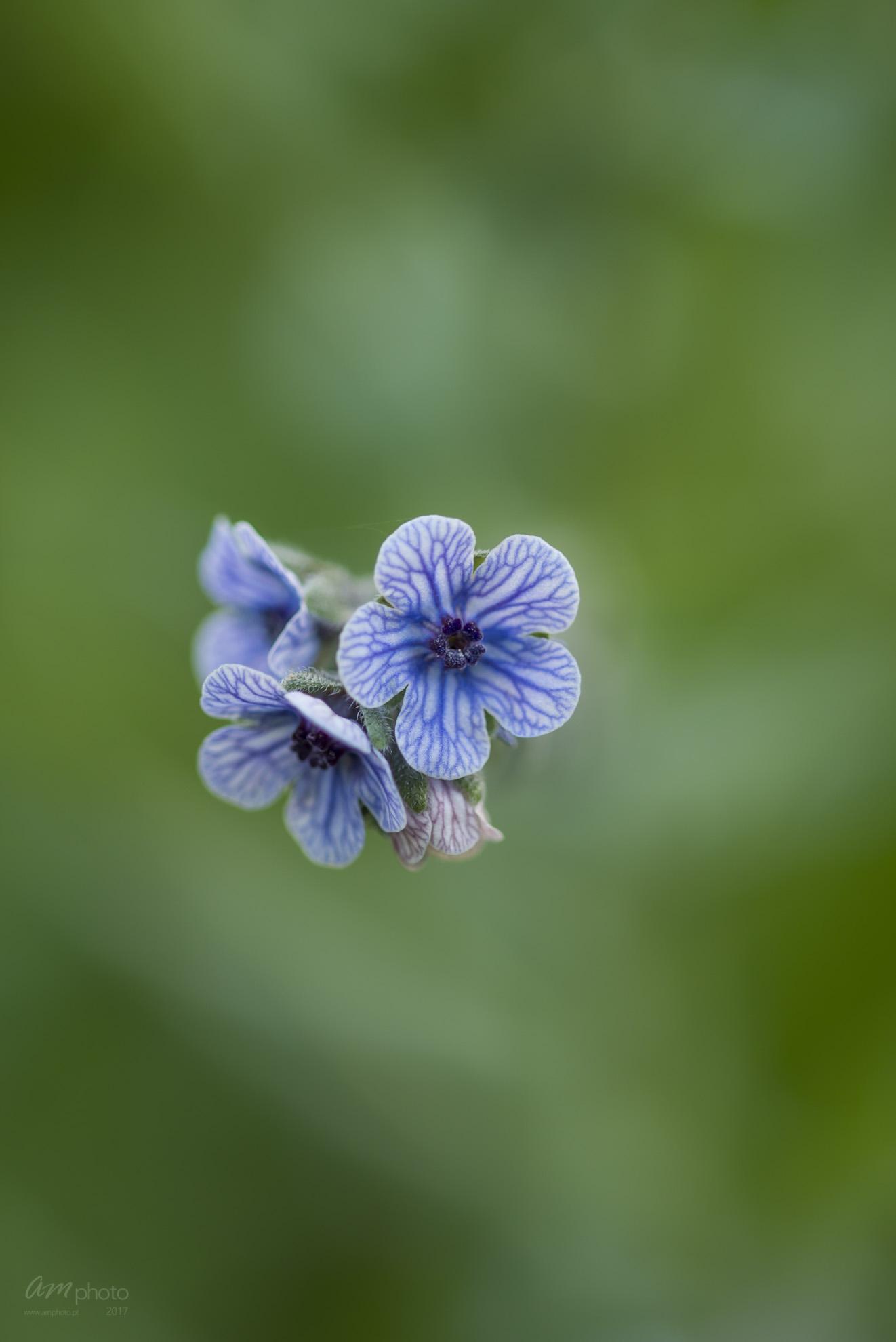 Wild Flowers-731