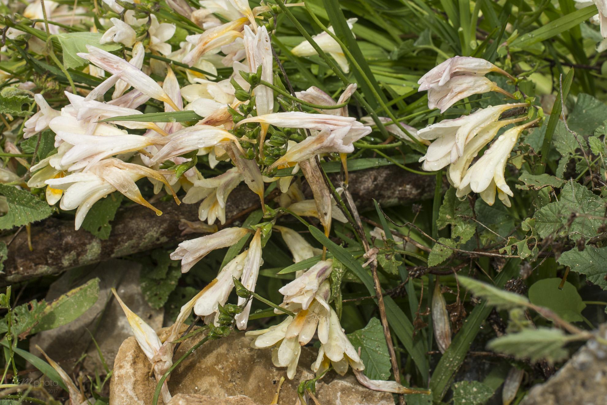 Wild Flowers-489
