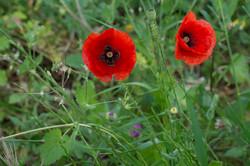 Wild Flowers-172