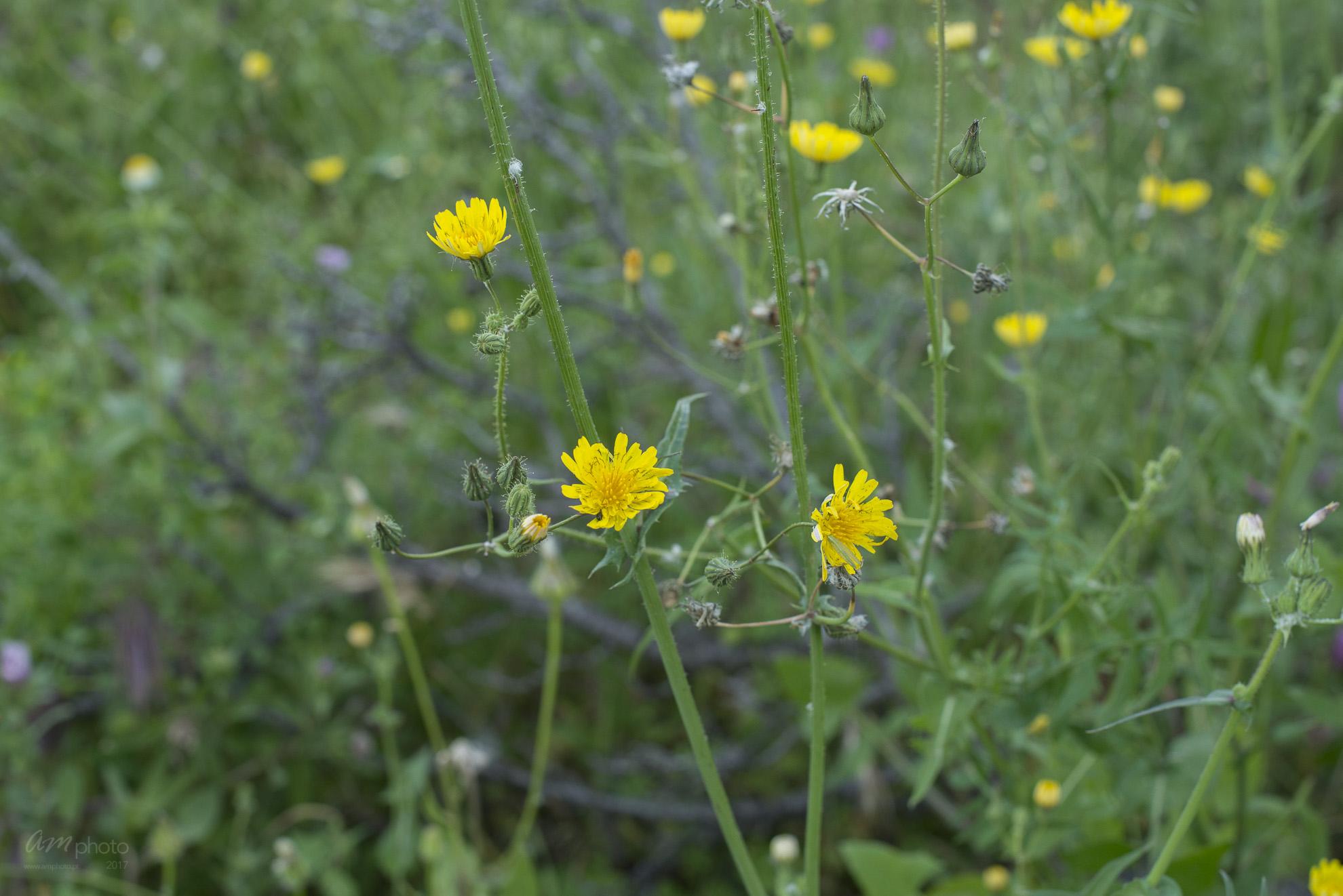 Wild Flowers-174