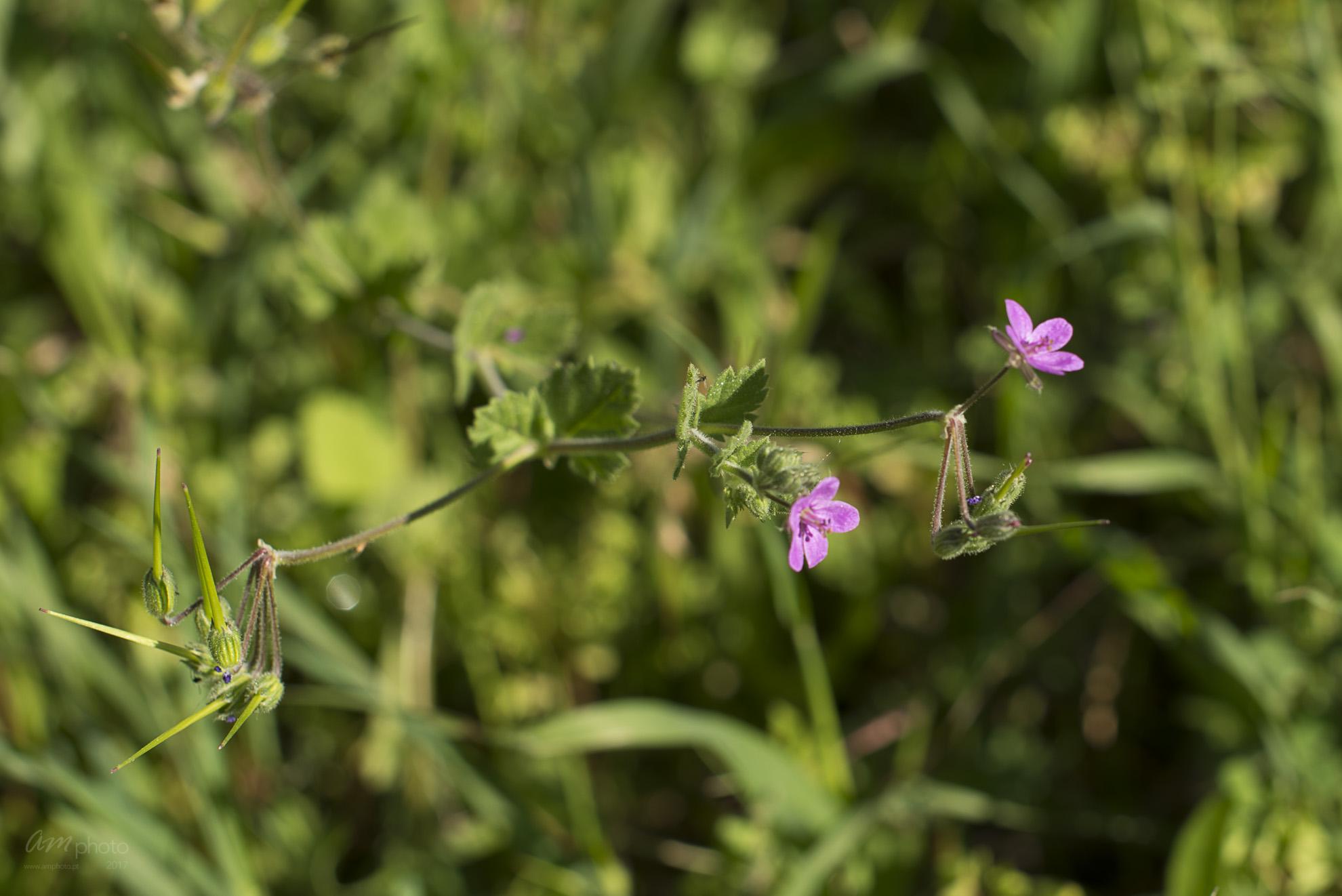 Wild Flowers-261