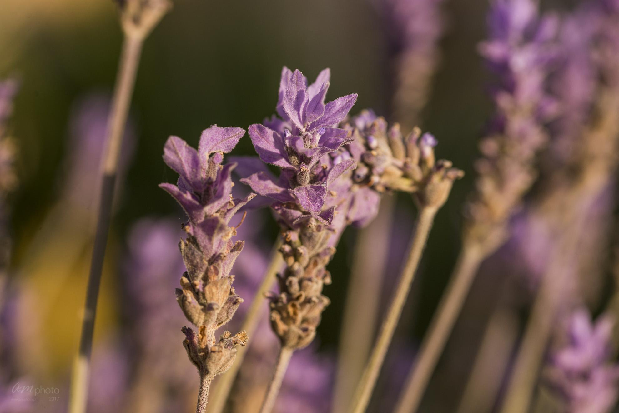 Wild Flowers-555
