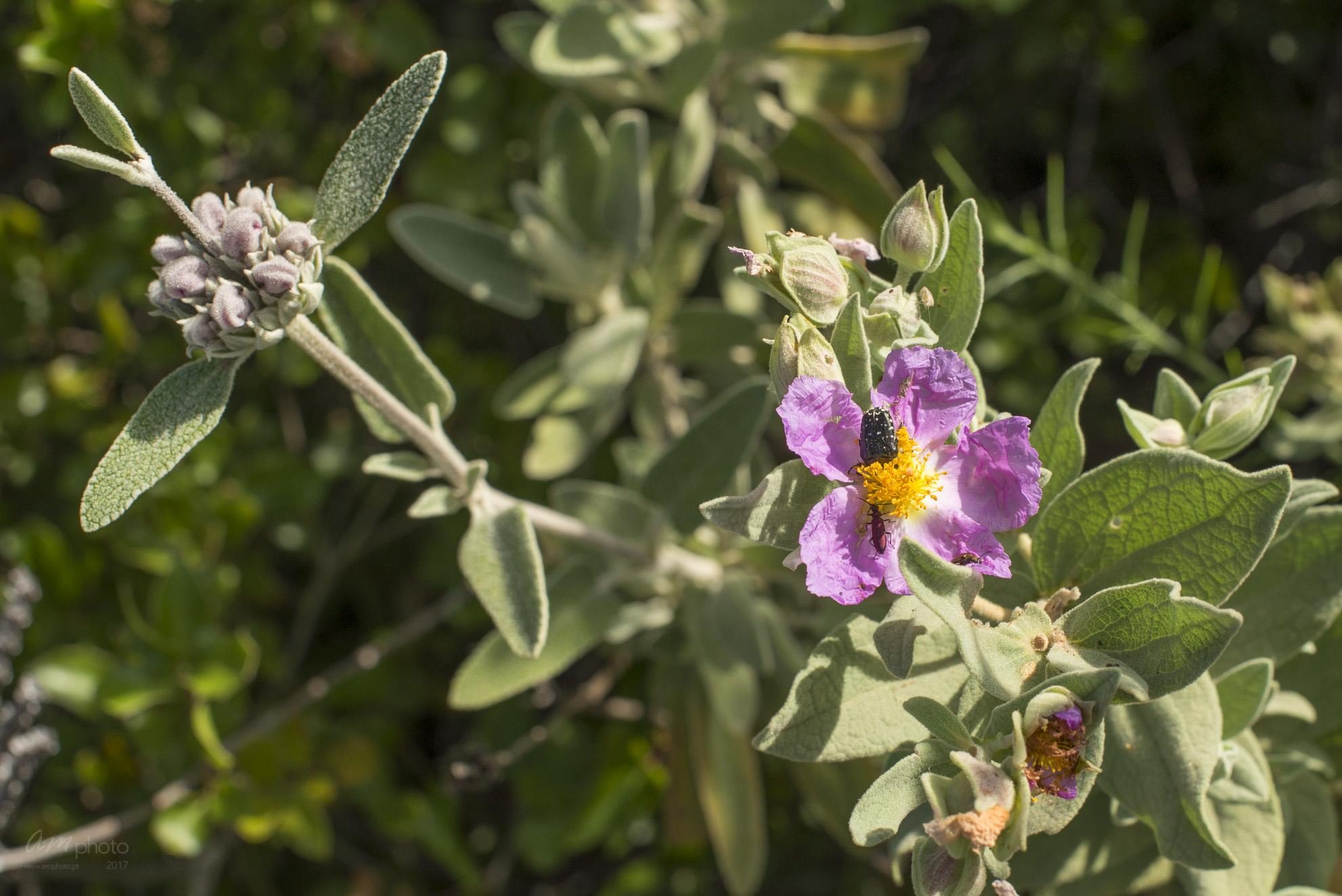 Wild Flowers-154