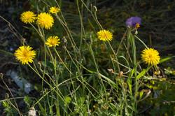 Wild Flowers-285
