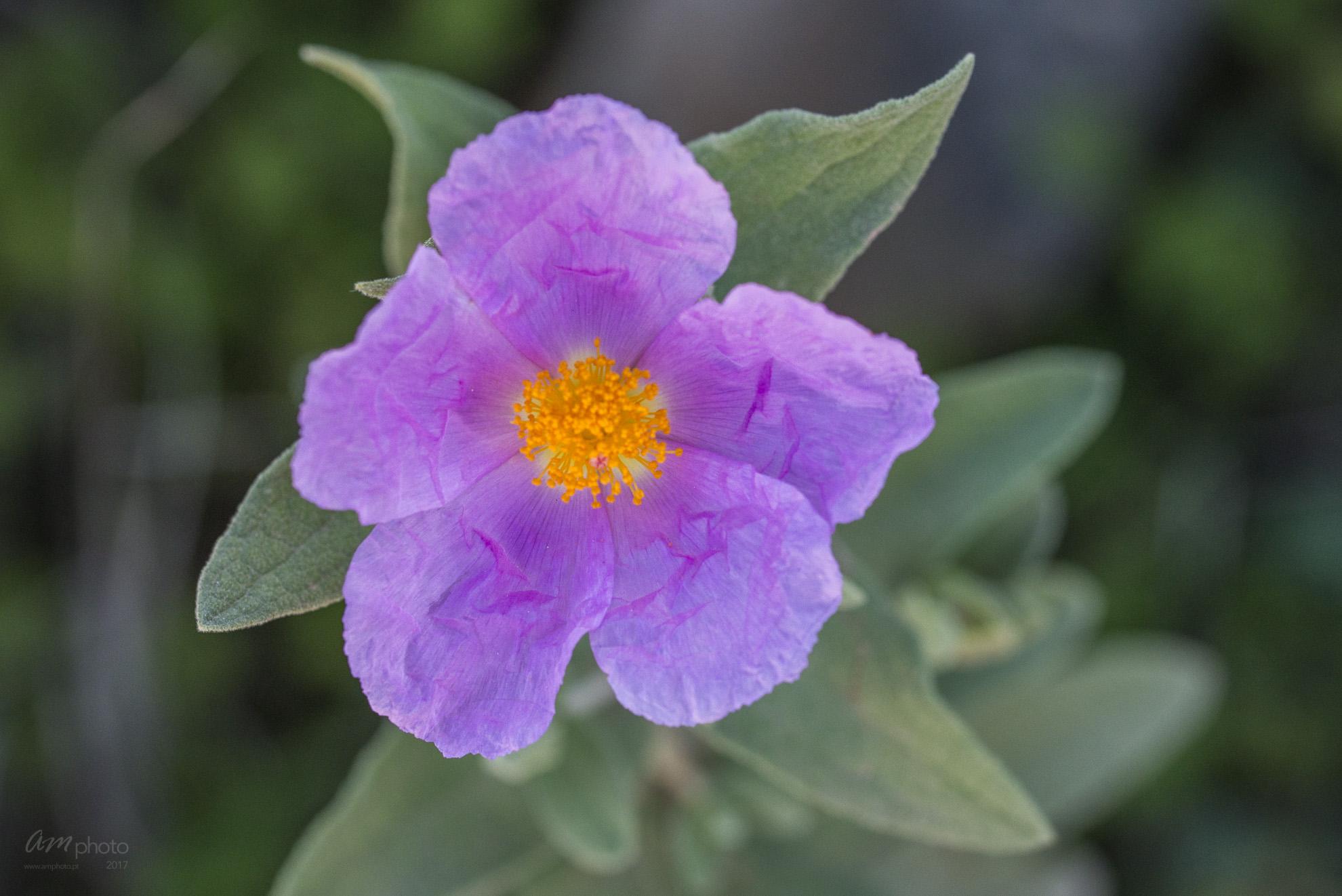 Wild Flowers-585