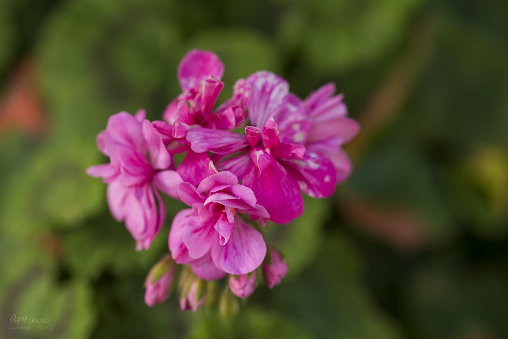 Wild Flowers-654