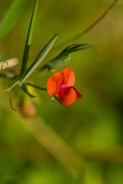 Wild Flowers-715