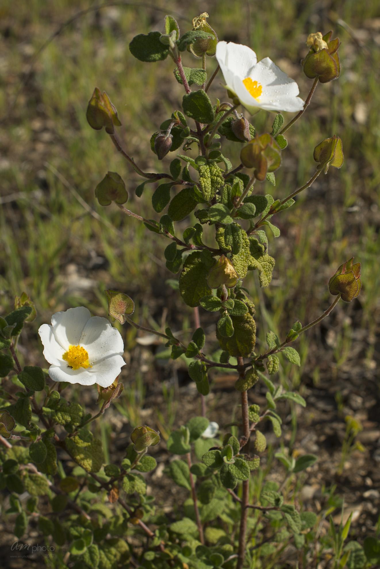 Wild Flowers-191