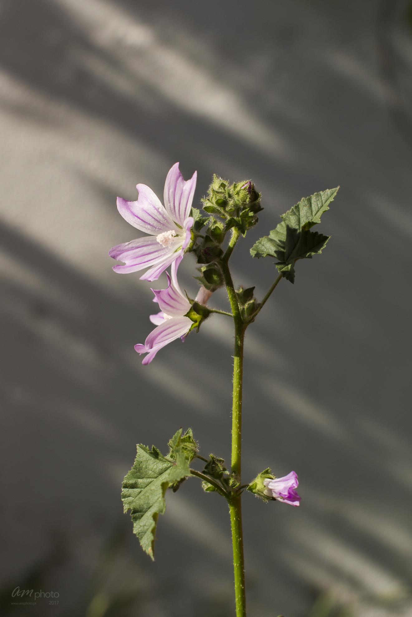 Wild Flowers-108