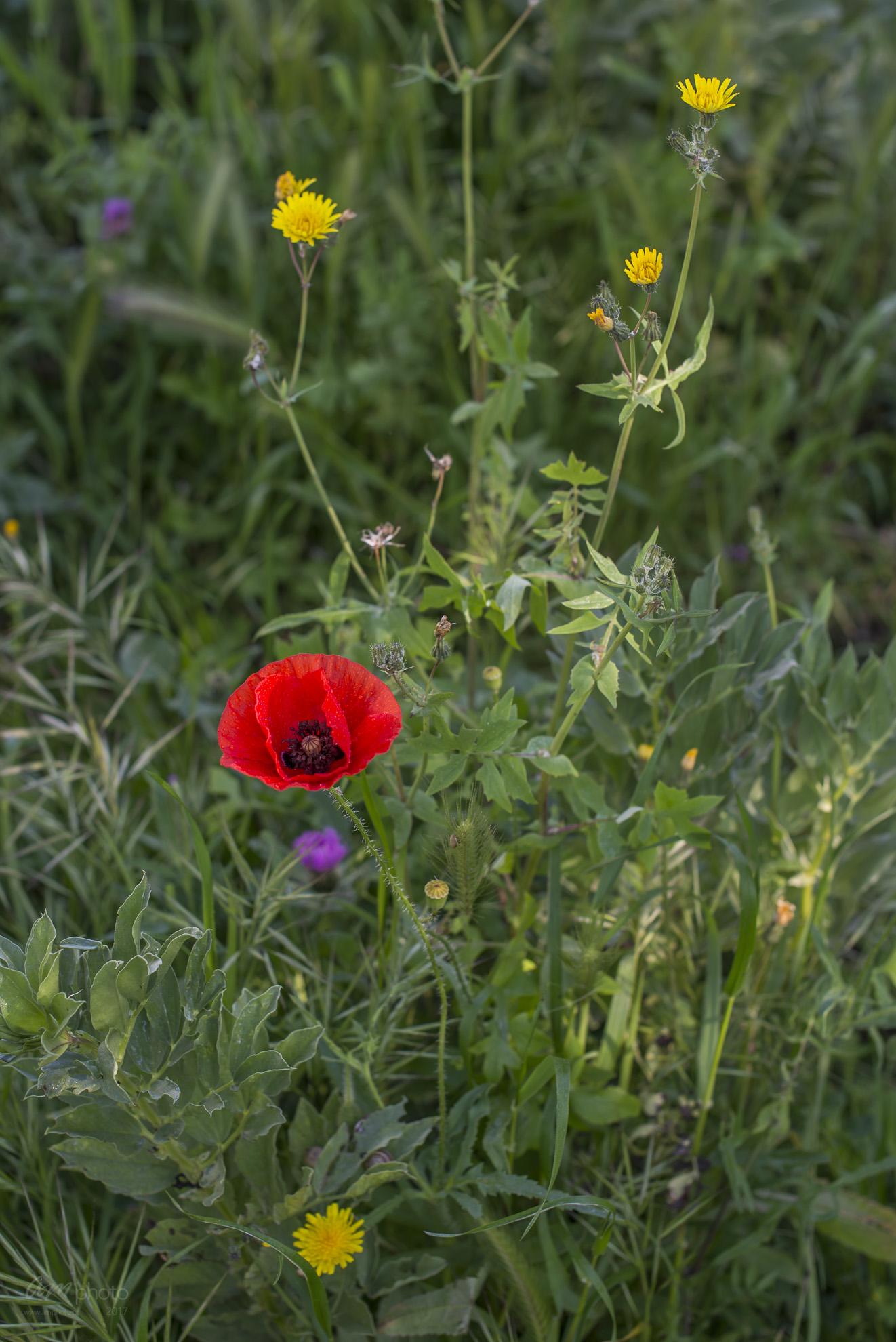 Wild Flowers-401