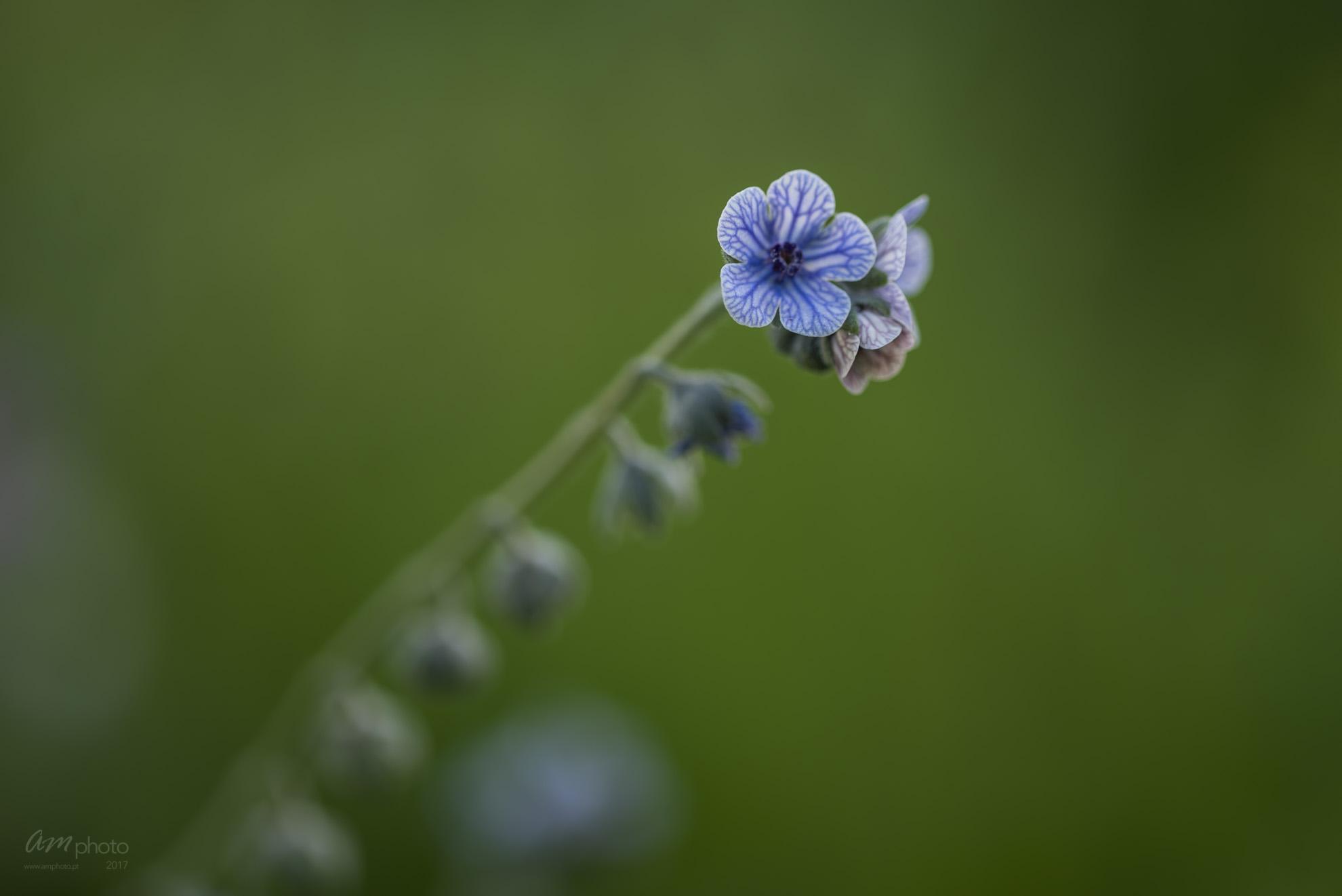 Wild Flowers-730