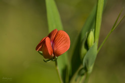 Wild Flowers-714