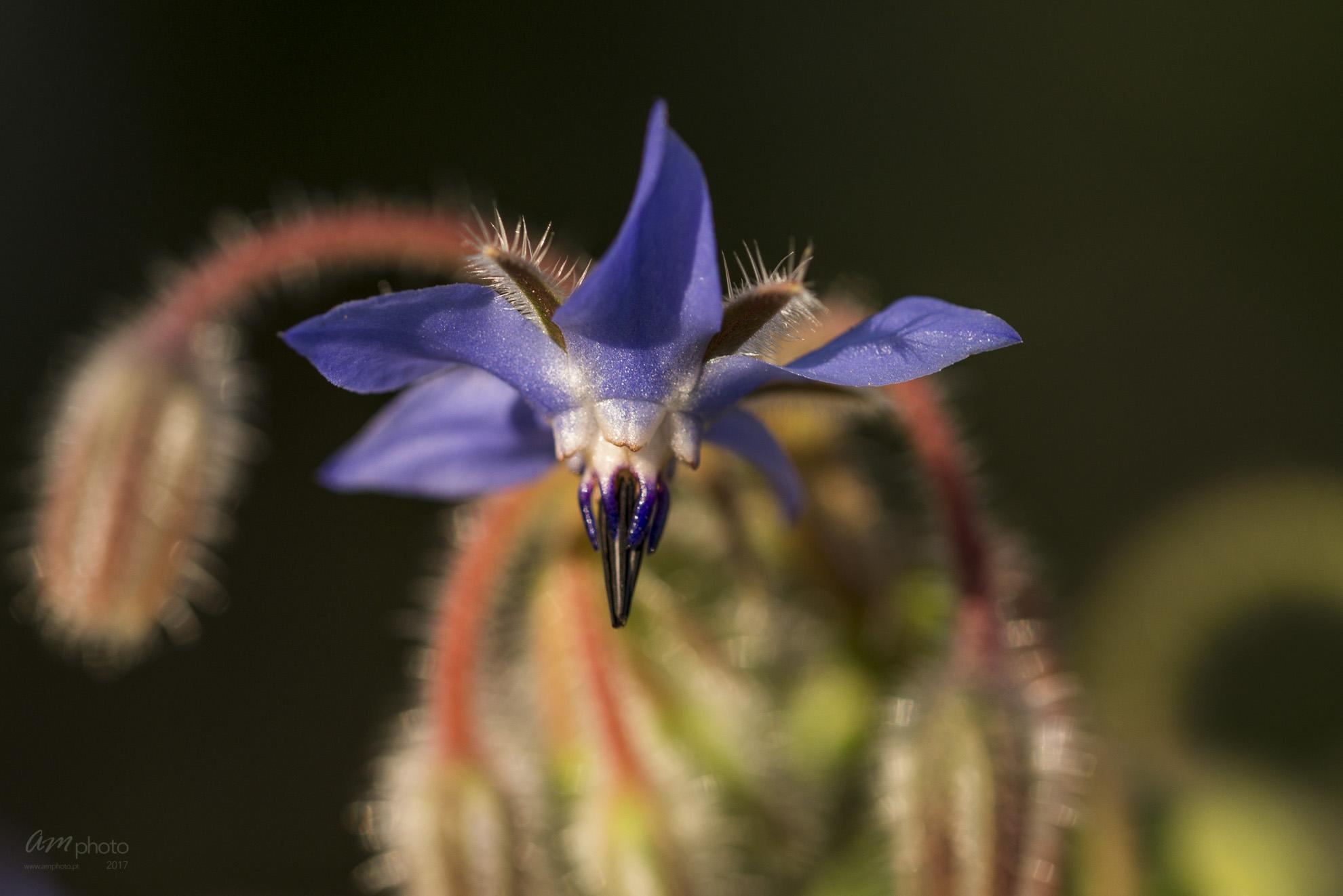 Wild Flowers-550