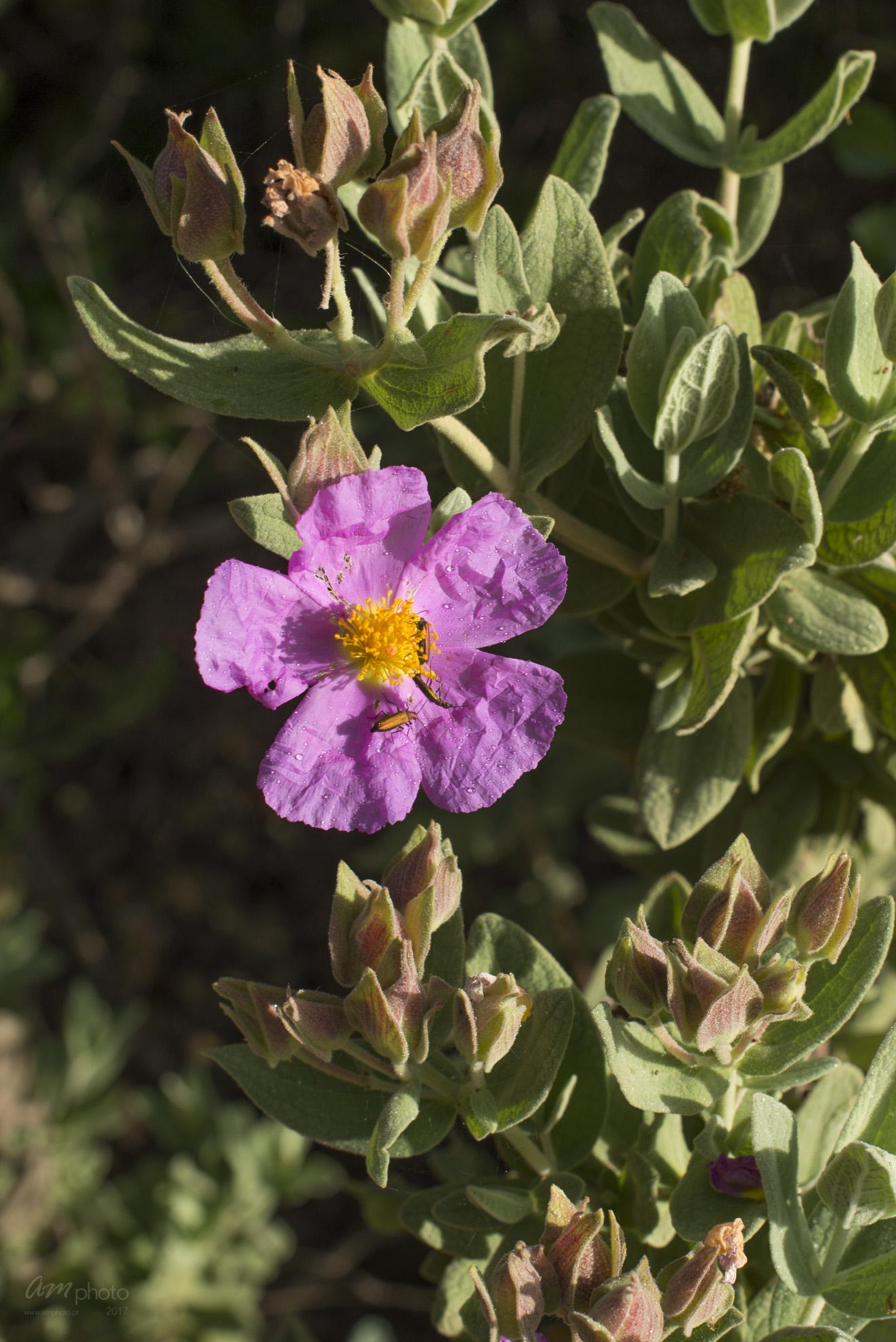 Wild Flowers-150
