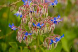 Wild Flowers-531