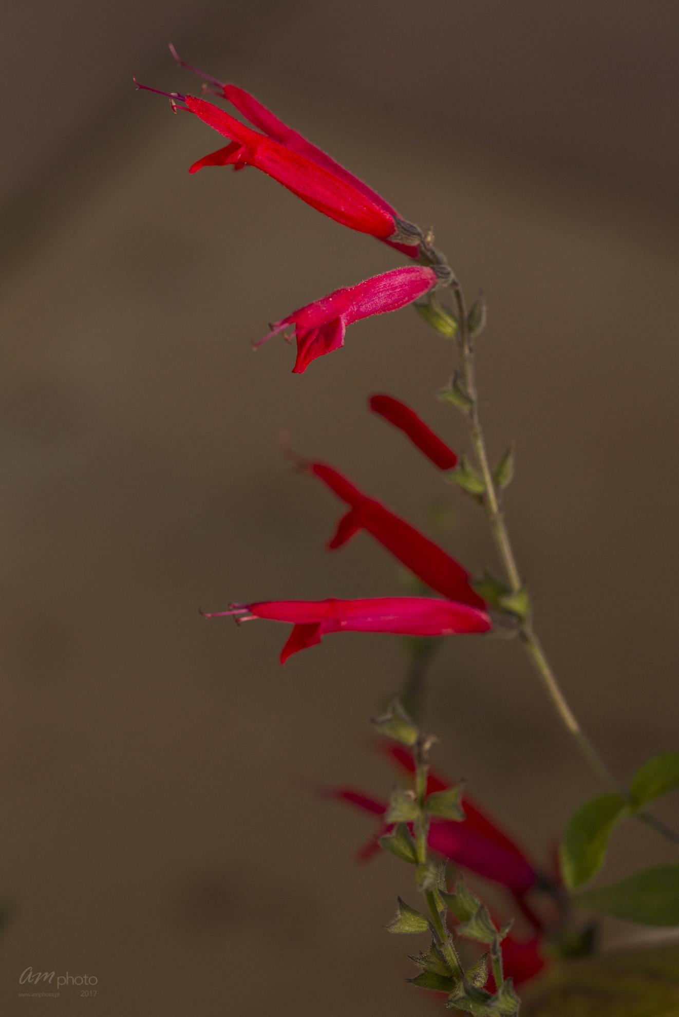 Wild Flowers-615