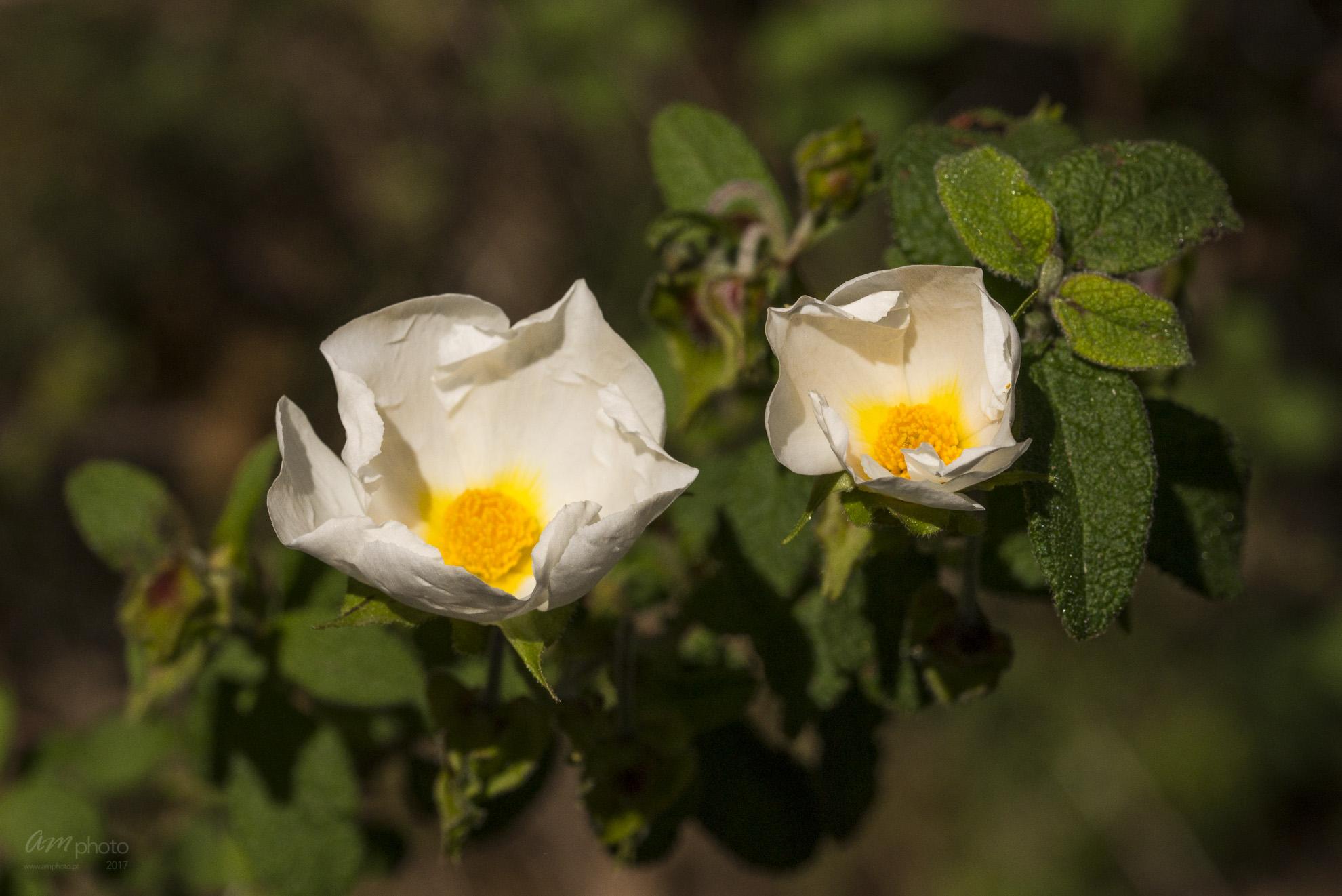 Wild Flowers-581