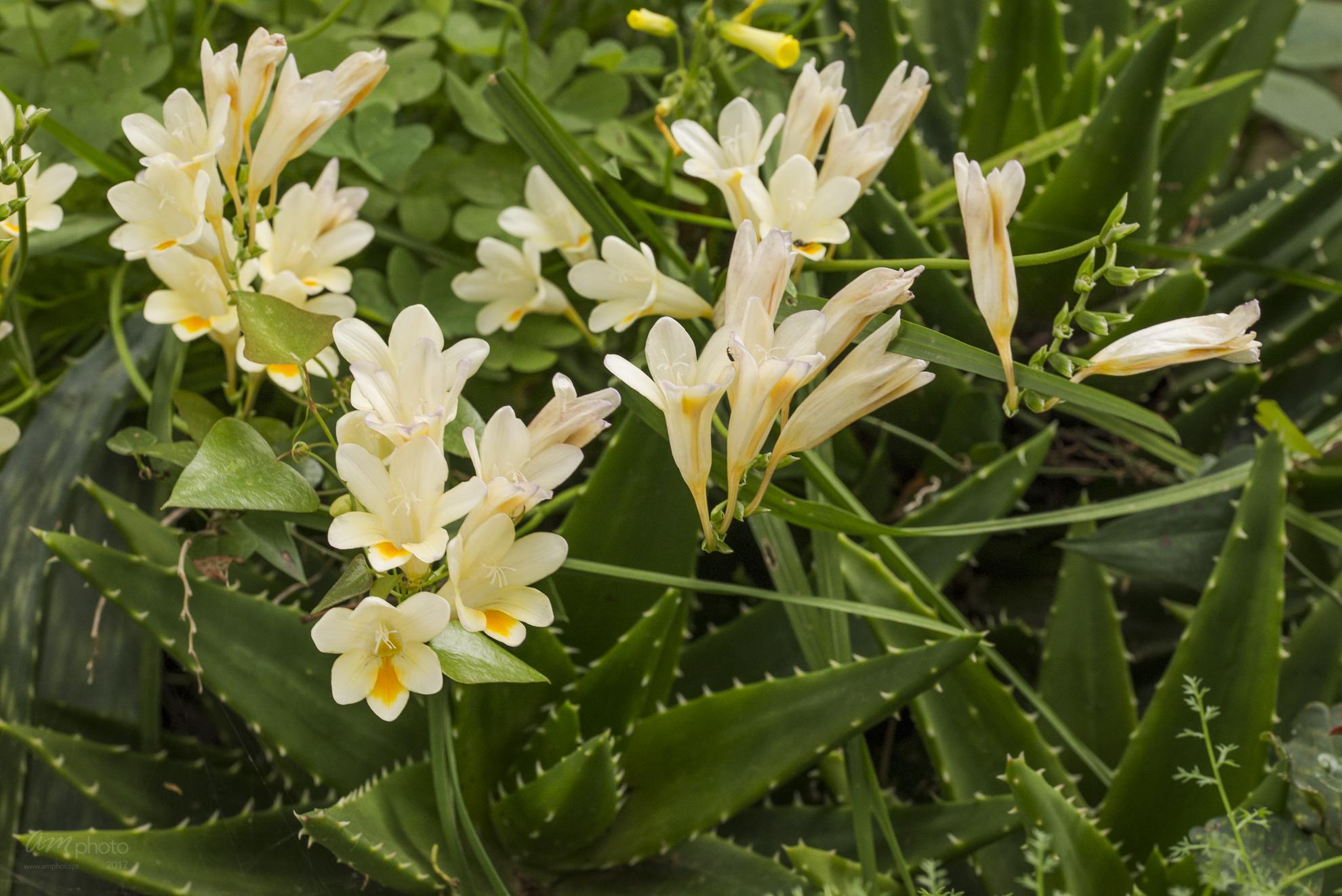 Wild Flowers-536