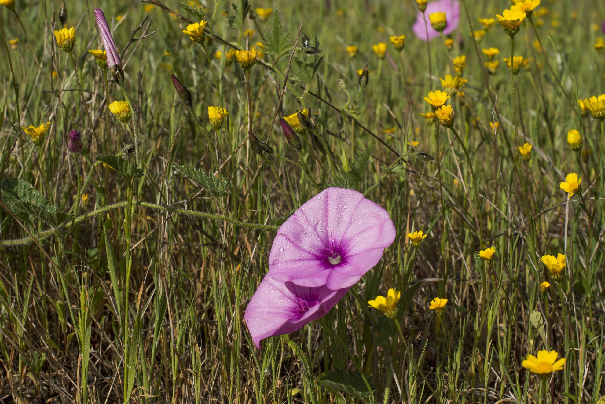 Wild Flowers-144