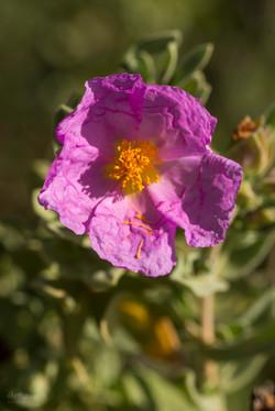 Wild Flowers-706