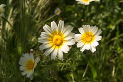 Wild Flowers-346