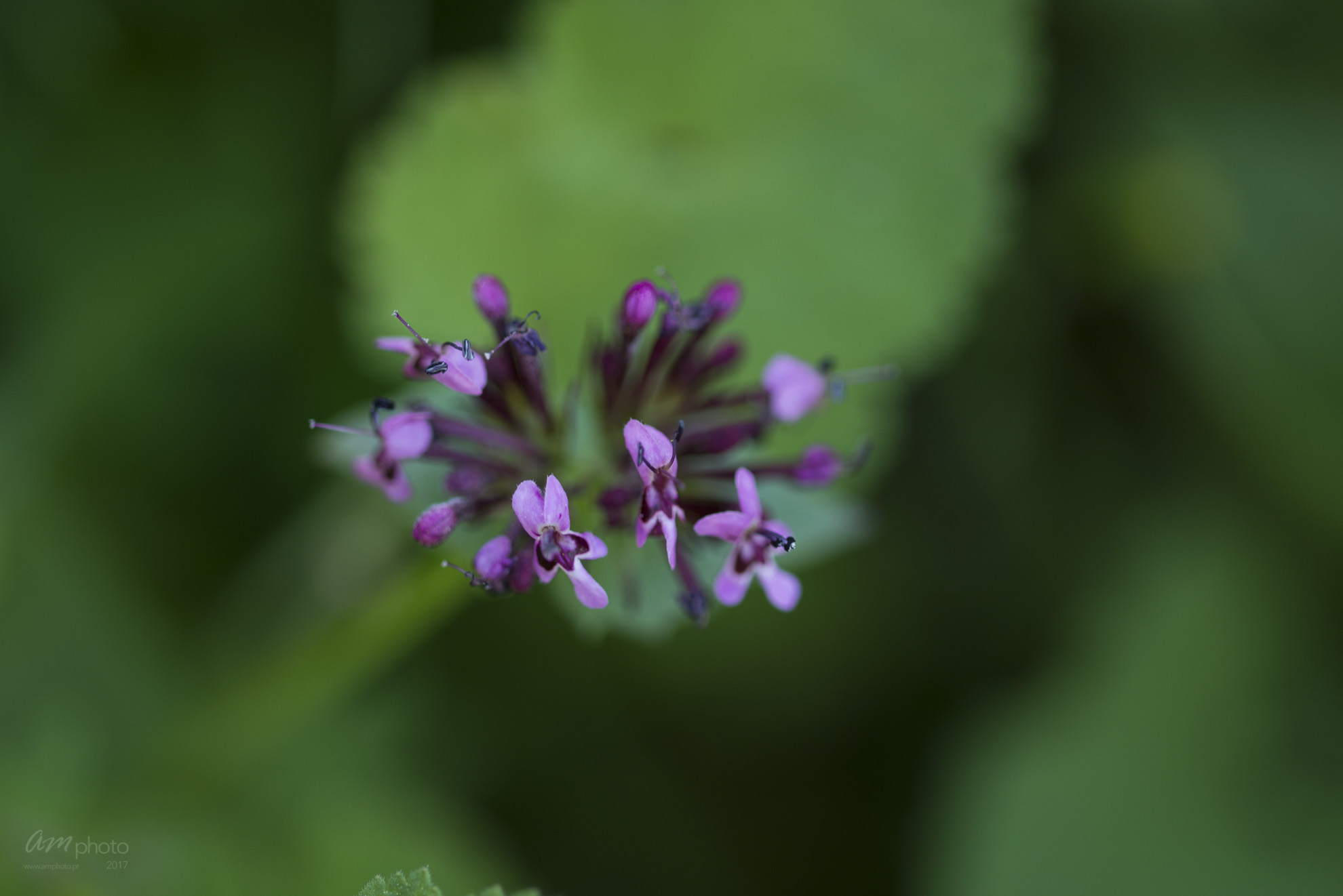 Wild Flowers-740