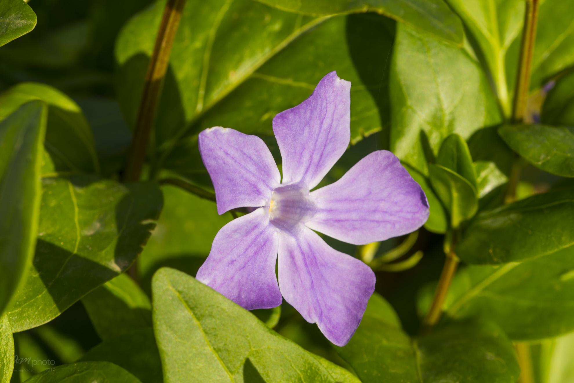 Wild Flowers-653