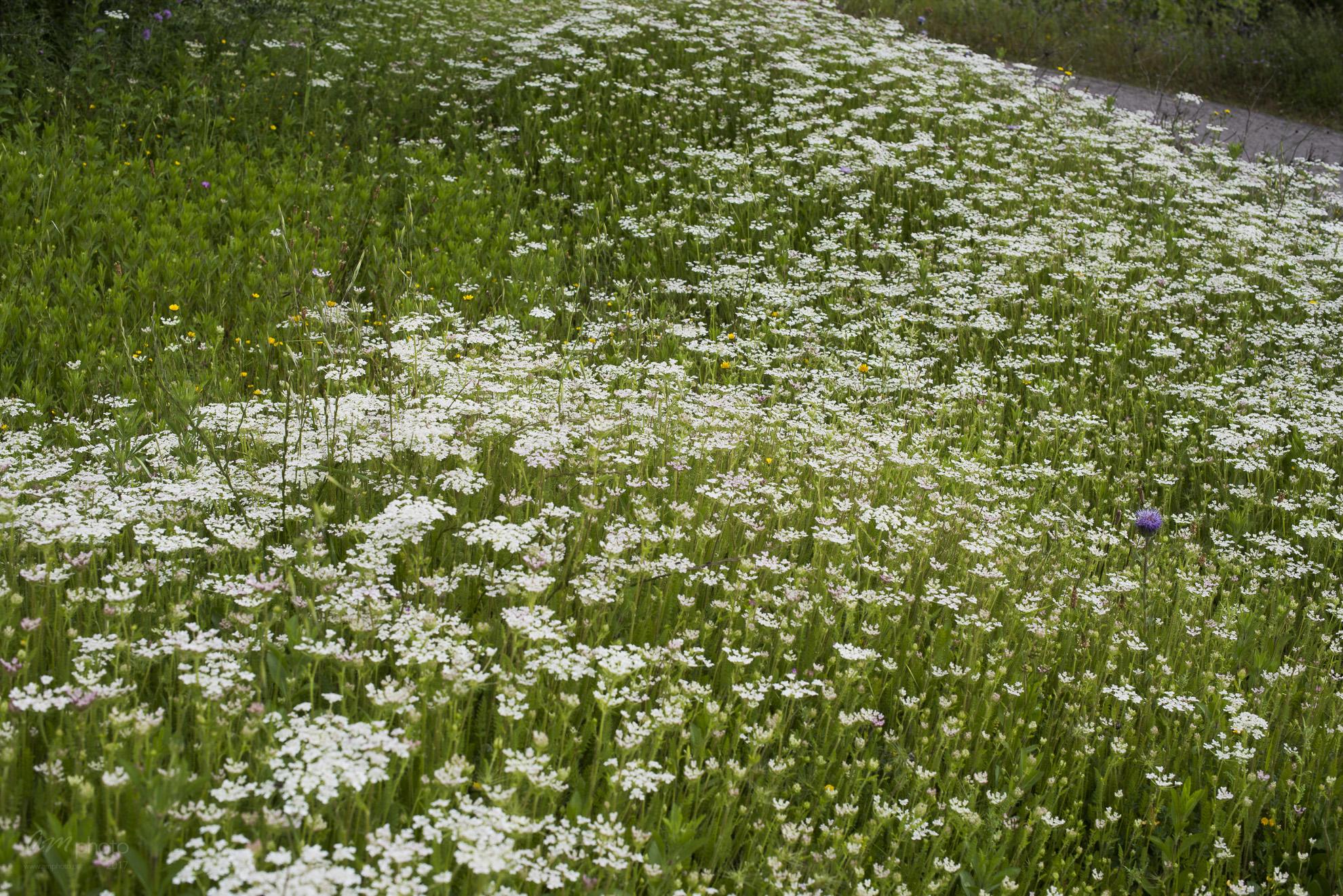 Wild Flowers-69