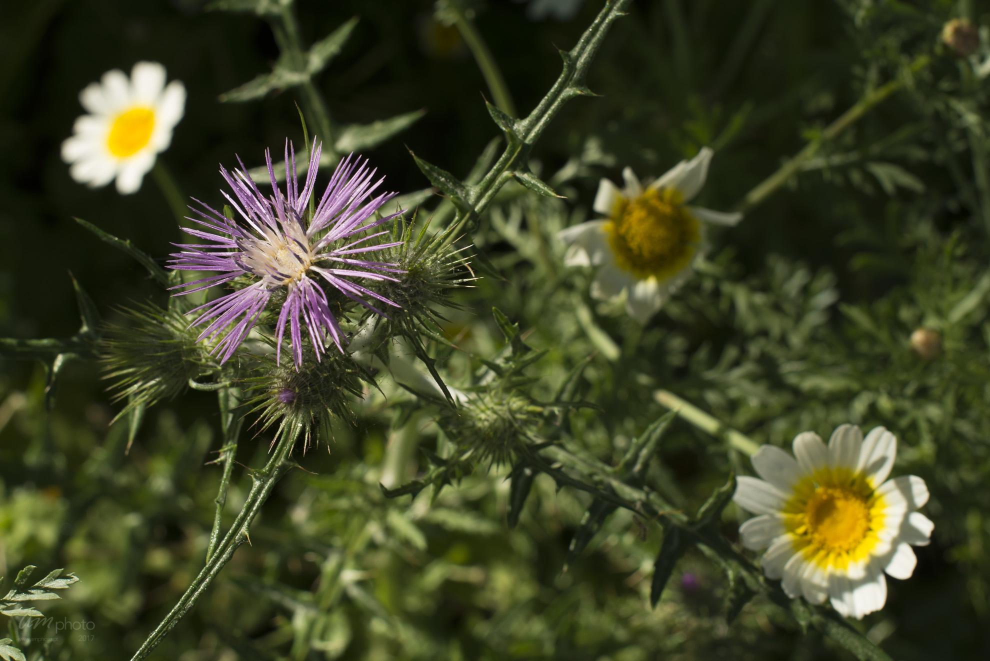 Wild Flowers-291