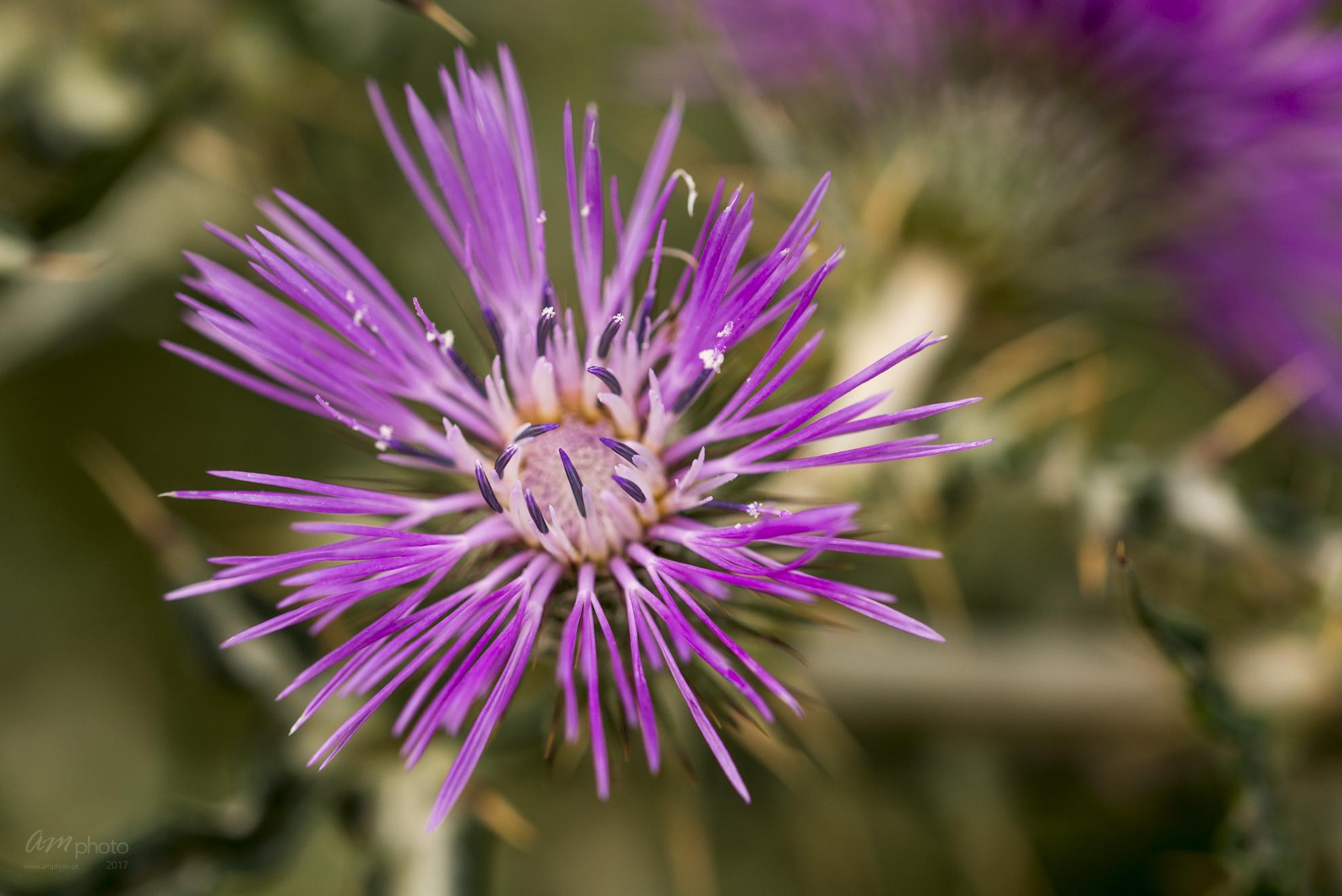 Wild Flowers-522