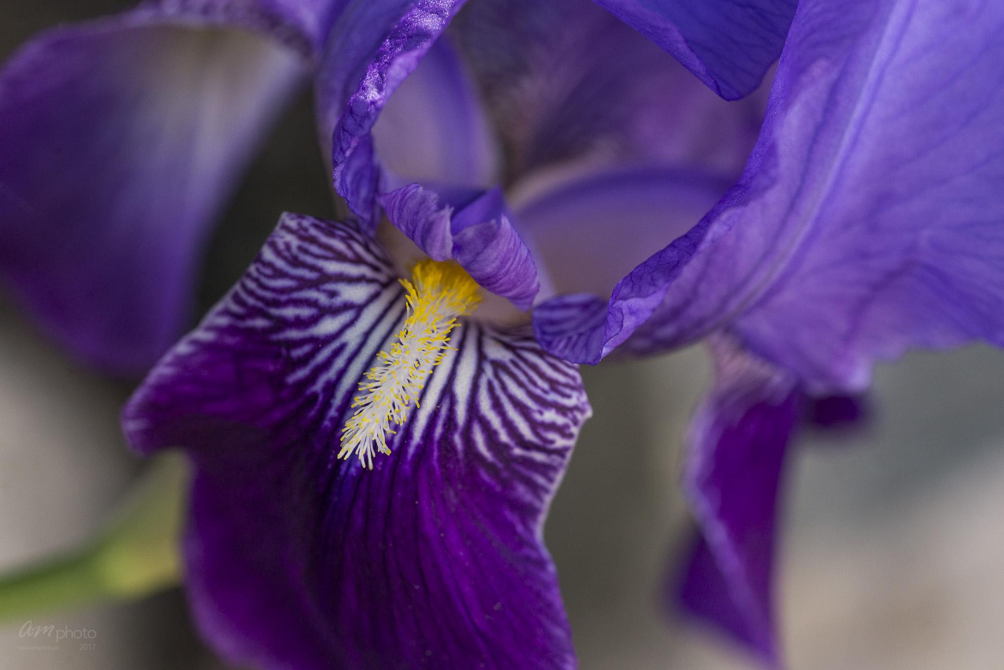 Wild Flowers-603