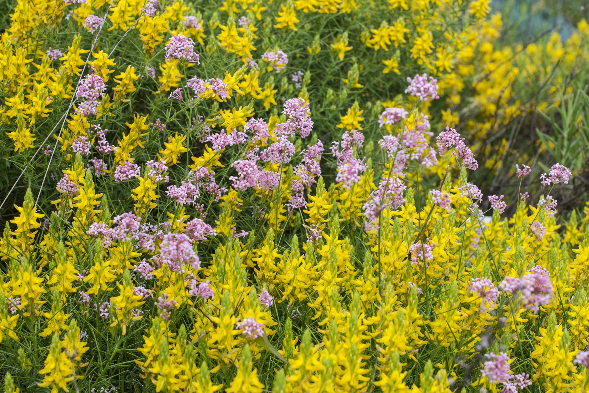 Wild Flowers-76