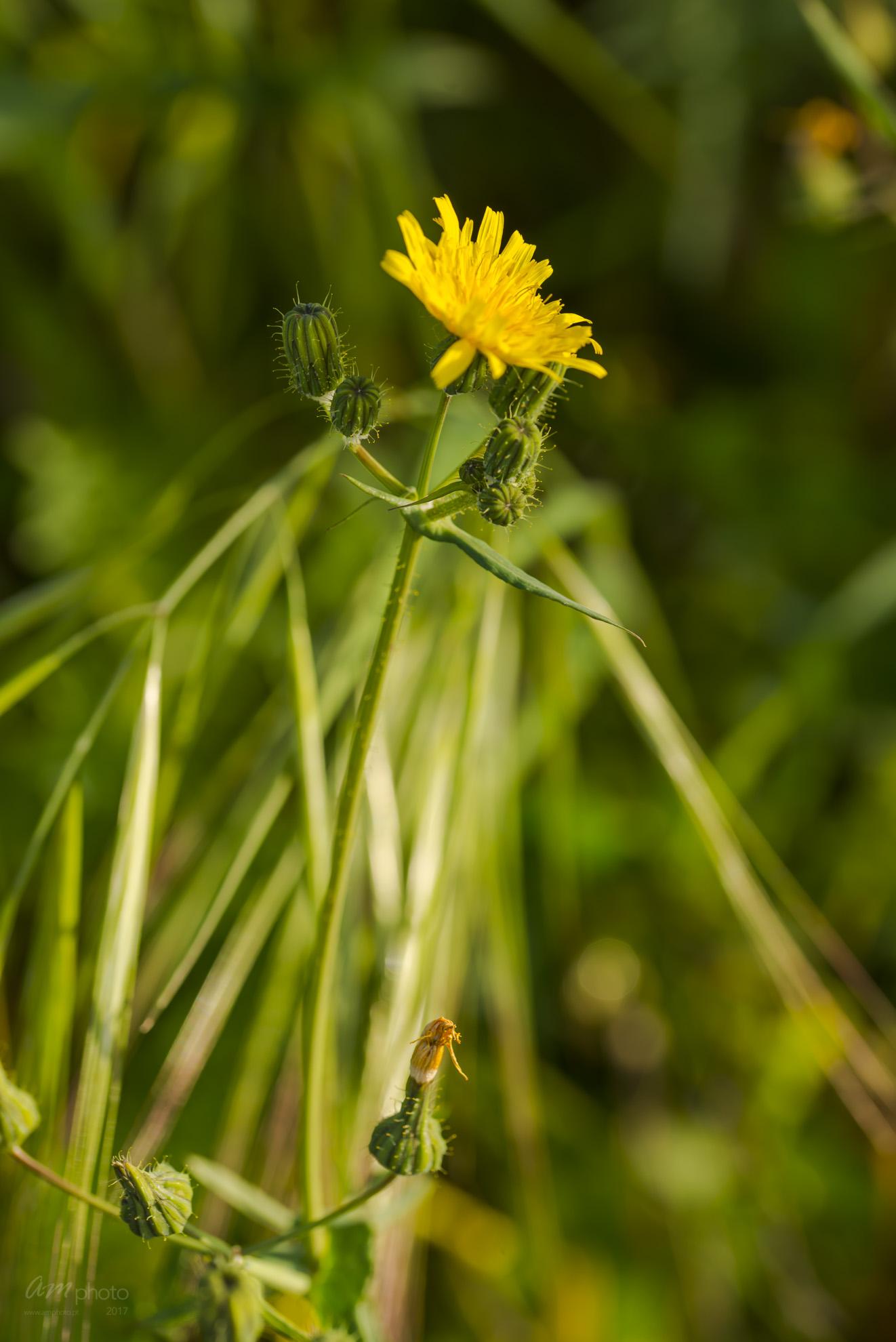 Wild Flowers-644